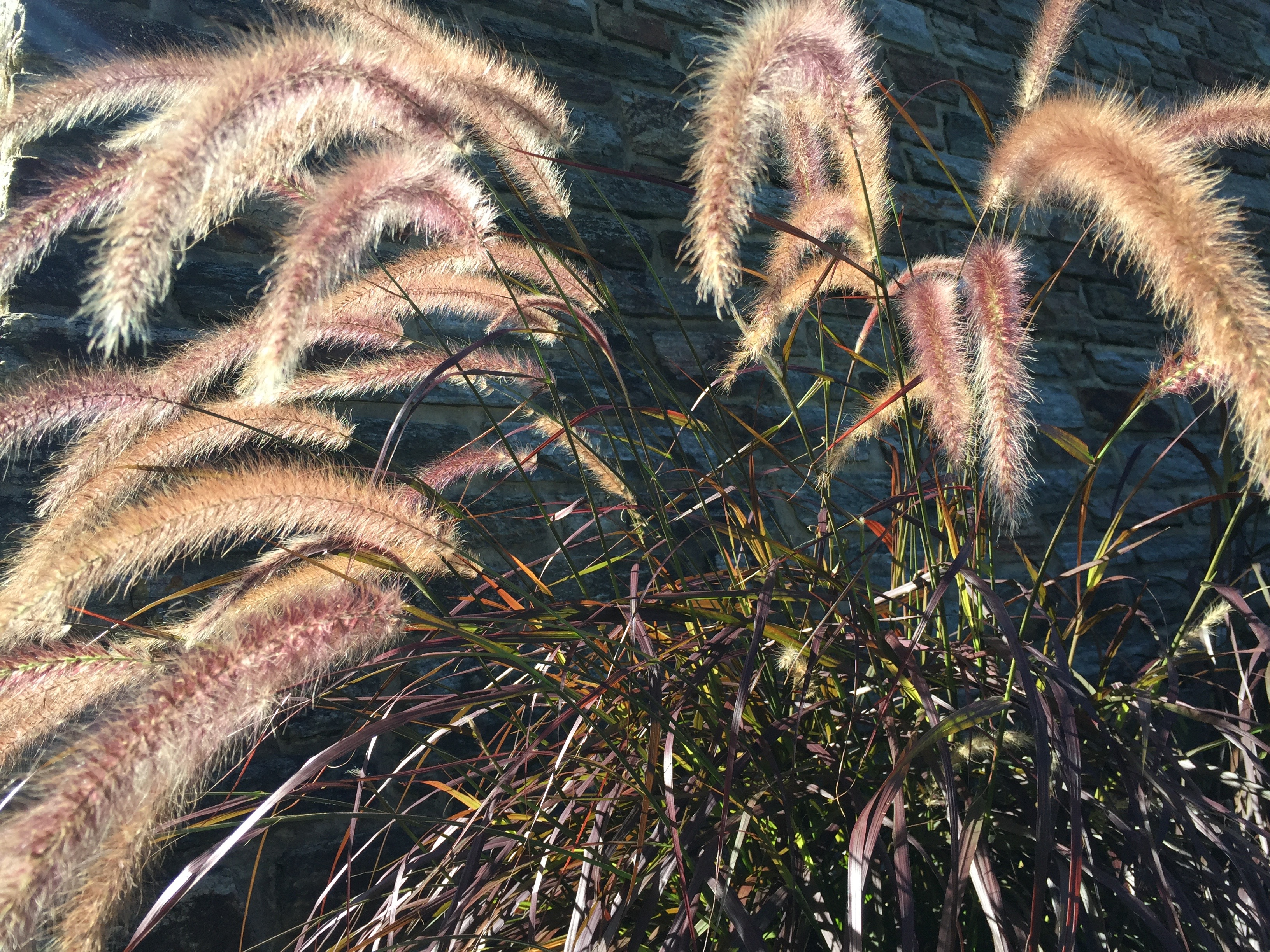 glowinggrasses